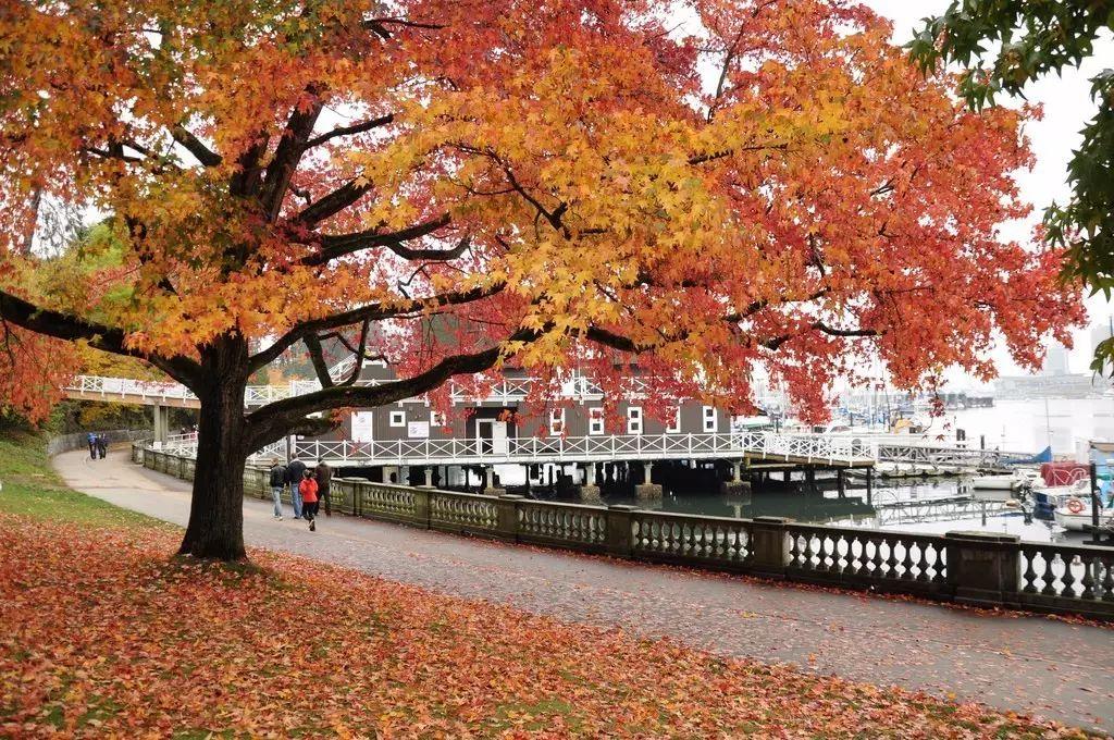 壁纸 枫叶 红枫 树 750_498图片